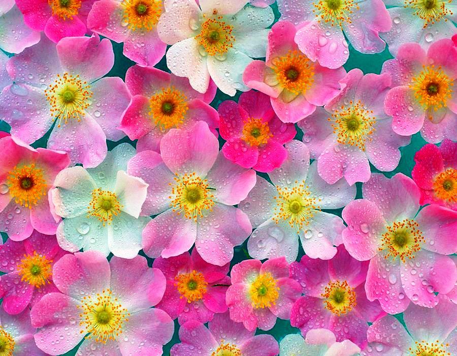 beautiful-nature-blooming-flowers-2